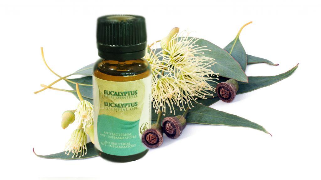 Huile Essentielle d'Eucalyptus par Azoor