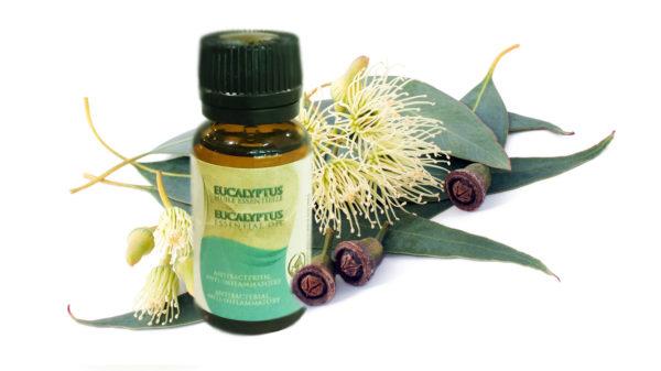 Huile Essentielle d'Eucalyptus par Atlas Cosmetics